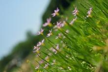 日々振り返り-野に咲く・・・
